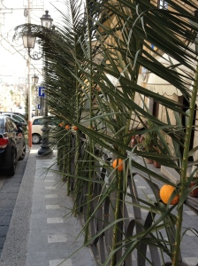 Palms & Oranges for S. Giuseppe